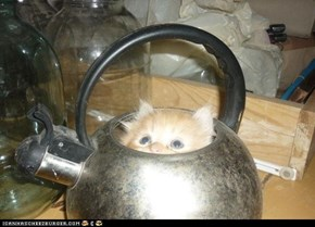 Cyoot Kitteh of teh Day: Tea Time!