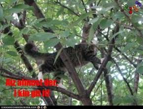 Tho she neber clumb a tree bafor . . .