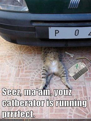 Seez, ma'am, youz catberator is running prrrfect.