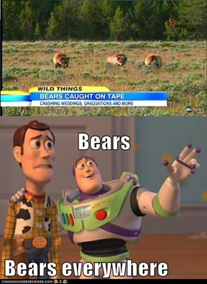 Bears Bears everywhere