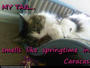 MY TAIL...  smells  like  springtime  in      Caracas