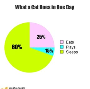 What a Cat Does in One Day