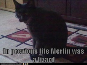 In previous life Merlin was a lizard