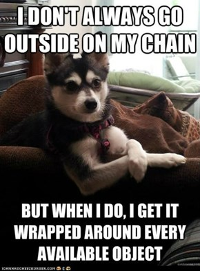 The Most Interesting Dog in the World