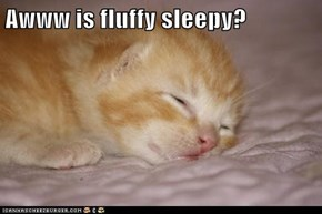 Awww is fluffy sleepy?