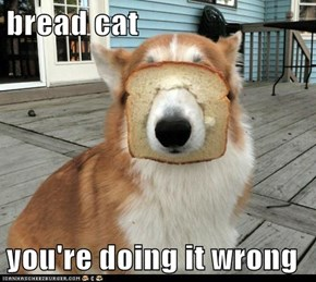 bread cat  you're doing it wrong