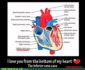 "When I say ""from the bottm of my heart"" I really mean from the bottm of my heart"