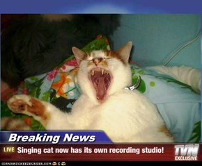 Breaking News - Singing cat now has its own recording studio!