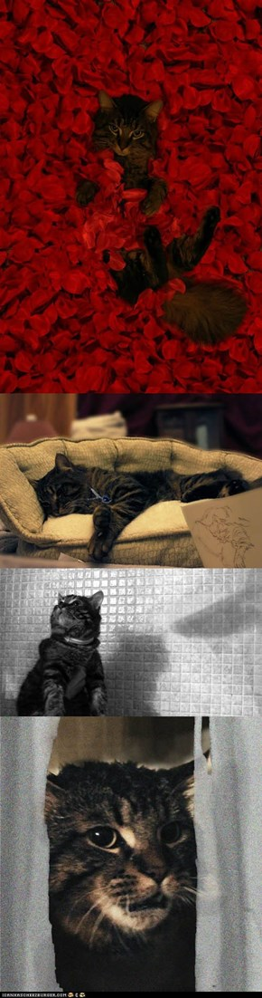Cat Reenacts Iconic Film Scenes
