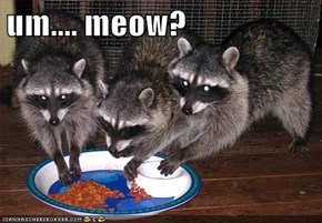 um.... meow?