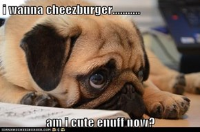 i wanna cheezburger...........  am i cute enuff now?