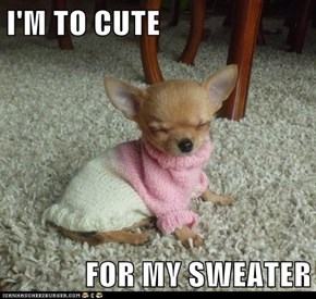 I'M TO CUTE  FOR MY SWEATER