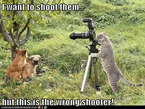 I want to shoot them...  but this is the wrong shooter!