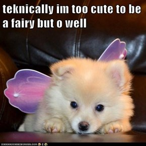 teknically im too cute to be a fairy but o well