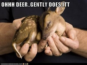 OHHH DEER..GENTLY DOES ITT
