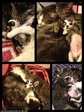 Goggies R Owr Friends: Six Months of Cuddles