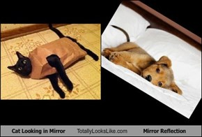 Cat Looking in Mirror Totally Looks Like Mirror Reflection