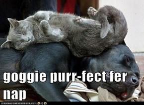 Purr-fect nap spot