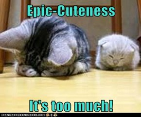 Epic-Cuteness  It's too much!