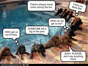Pup poop pool emergency.