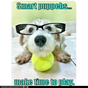 Smart puppehs...  make time to play.