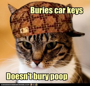 Scumbag Cat: Sift Through It!