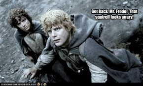 Get Back, Mr. Frodo!  That squirell looks angry!