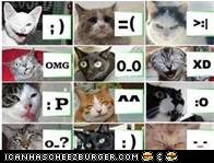 emotions cats can have