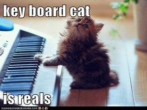 key board cat  is reals
