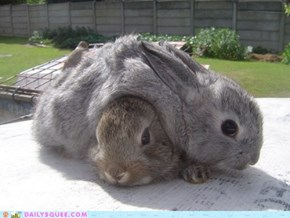 Bunday: Cuddle Puddle