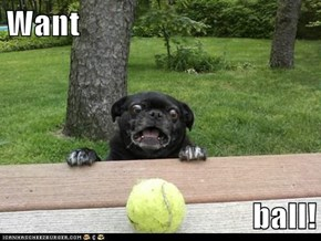 Want  ball!