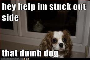 hey help im stuck out side  that dumb dog