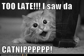 TOO LATE!!! I saw da   CATNIPPPPPP!