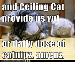 and Ceiling Cat provide us wif   or daily dose of catnipz. amenz.