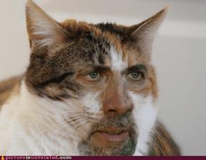 Nicholas Cat