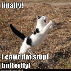 finally!   i cawt dat stupi butterfly!