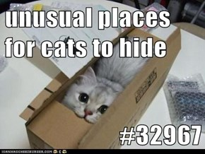 unusual places for cats to hide  #32967