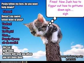 Pesky kitten my love, do you want help down?
