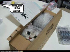Honey, your LOLCat arrived.
