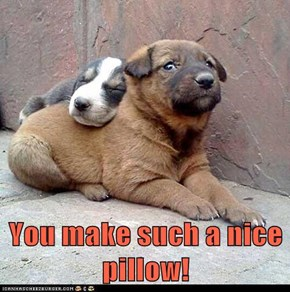 You make such a nice pillow!