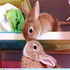 Bunday: Vertical Bunny Kiss