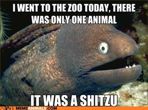 Bad Joke Eel: They Even Spelled it That Way