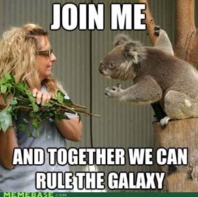 I Am Your Koala