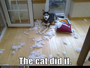 The cat did it.