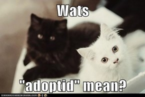 "Wats  ""adoptid"" mean?"