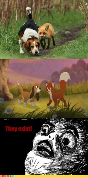 The Fox and The Hound IRL