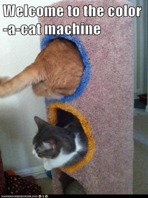 Welcome to the color-a-cat machine
