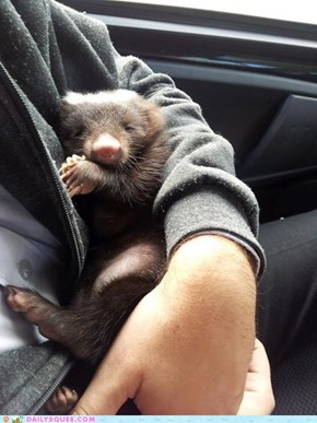 Reader Squee: Muffy , the little Skunk!