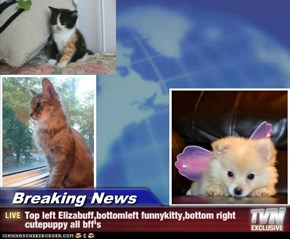 Breaking News - Top left Elizabuff,bottomleft funnykitty,bottom right cutepuppy all bff's