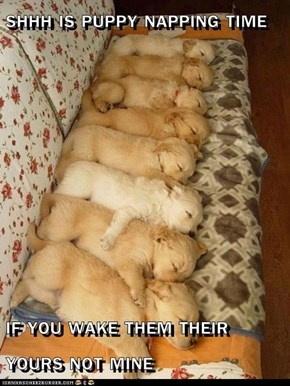 SHHH IS PUPPY NAPPING TIME  IF YOU WAKE THEM THEIR YOURS NOT MINE